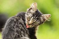 Ciri - ciri Kucing Anda Sakit