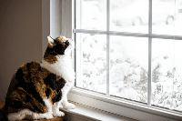 Tips Cara Merawat Kucing saat Anda Berpergian