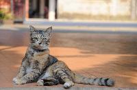 Cara Merawat Kucing Kampung - Berikan Ia Tanda Pengenal