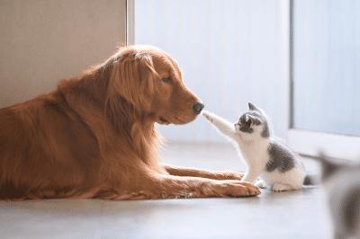 Mengenalkan anak kucing dan hewan peliharaan lainnya