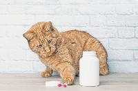 Cara Anda Memastikan Agar Memelihara Kucing Anda dengan Aman