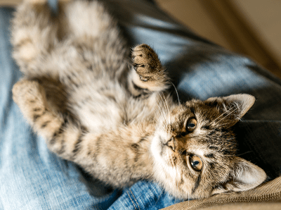 Cara Menciptakan Rutinitas Untuk Kucing Agar Anda Dapat Merawat Ia Secara Maksimal