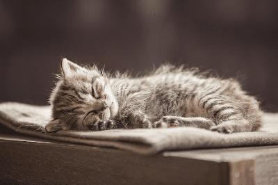 Alasan Mengapa Kucing Senang Tidur dan Saat yang Tepat untuk Bermain Bersamanya
