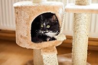 Rumah yang cocok untuk Kucing