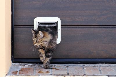 Menggunakan pintu Khusus anak kucing