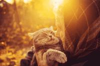 Pemeriksaan Kesihatan Kucing untuk Usia yang Lebih Panjang