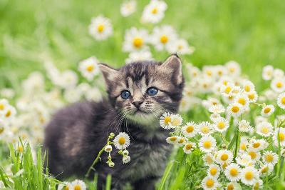Membesarkan Seekor Anak Kucing dengan Mencorakkan Rutin Seharian