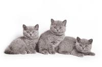 Cara Memilih Anak Kucing