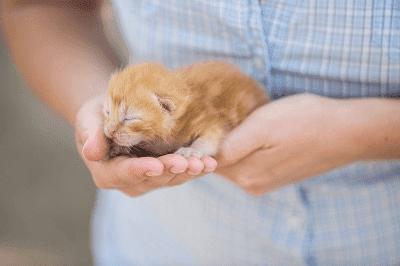 Membawa Balik Anak Kucing Baharu ke Rumah