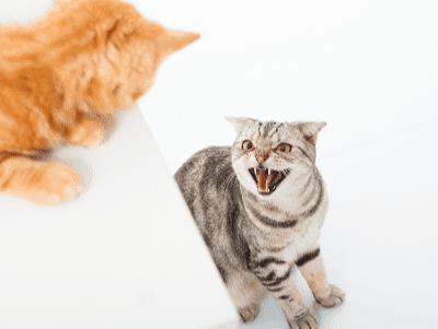 Mengurangkan Tingkah Laku Agresif Si Anak Kucing