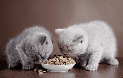Tip Memberi Makan kepada Kucing Anda