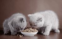 Anak Kucing Yang Sakit Perut
