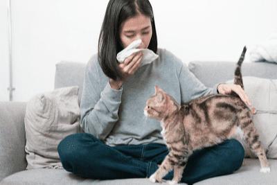 Alahan terhadap Kucing
