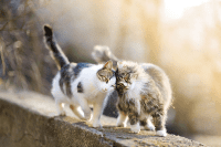 Kelakuan Menginjak-injak Si Anak Kucing