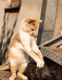 Tingkah Laku Menginjak-injak Si Anak Kucing
