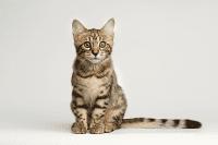 Bahasa Pergerakan Ekor Si Anak Kucing