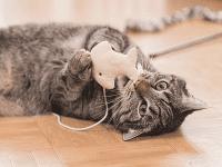 Mainan Kucing Yang Dibuat Sendiri
