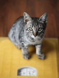 Berat Kucing