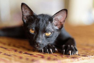 Naluri Memburu Si Anak Kucing