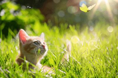 Naluri Semulajadi Tabiat Anak Kucing