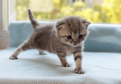 Anak Kucing Di Dalam Rumah Berlawanan Anak Kucing Di Luar Rumah