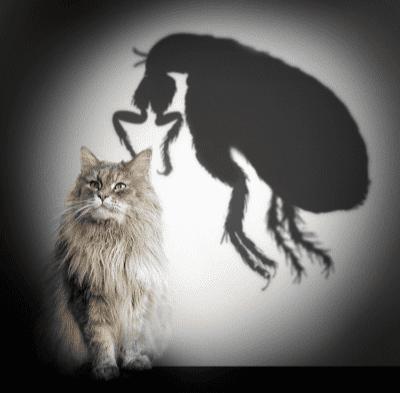 Mengawal Kutu Dan Cacing Anak Kucing