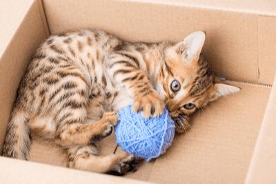 Aktiviti-aktiviti yang Boleh Dilakukan Ketika Anak Kucing Bermain
