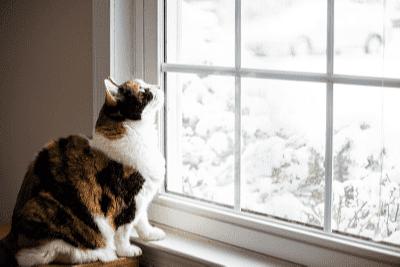 Penjagaan Anak Kucing Anda Apabila Anda Tiada di Rumah