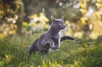Bermain Bersama Kucing di Sekitar Rumah