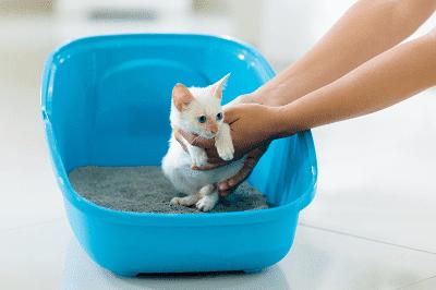 Bagaimana megajar anak kucing membuang air