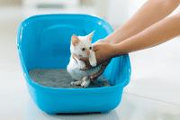 Mengajar Anak-anak Kucing  Membuang Air