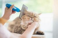 Penjagaan Bulu bagi Kucing yang Berusia