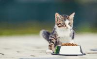 Cara Memberi Anak Kucing Makan dengan Cara yang Menyeronokkan