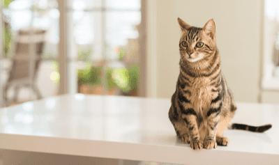 Penyesuaian rumah yang ada anak kucing