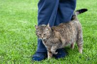 Tabiat Menggaru dan Menggesel Anak Kucing