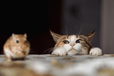 Memahami Kucing Anda