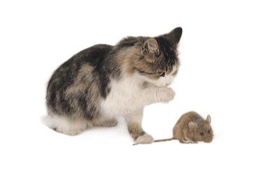 Si Anak Kucing Membawa Pulang Mangsa Buruannya