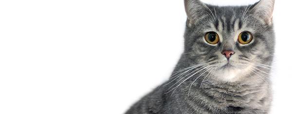 13 ciekawostek o kotach, o których nie miałeś pojęcia!
