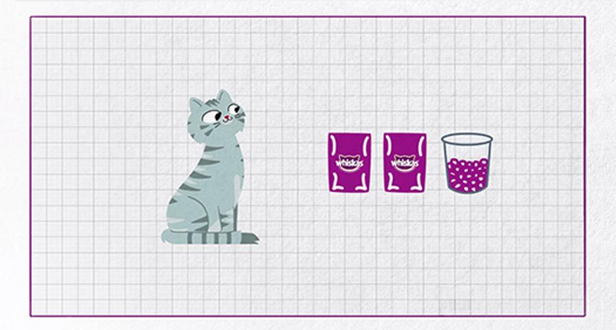 Wszystko o żywieniu kotów