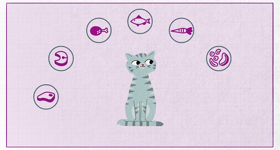 Co znajduje się w karmie dla kotów Whiskas® i jak ona powstaje?