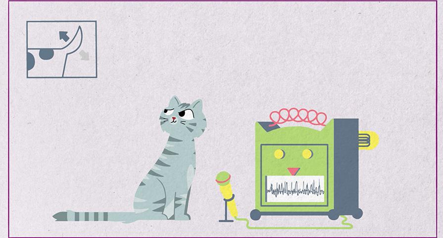 Dlaczego koty miauczą?