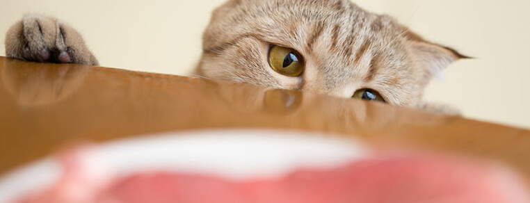 BARF dla kota - wymyślna dieta? Czy powrót do naturalnych instynktów?