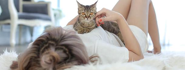 Ciąża kota – objawy, czas, przebieg