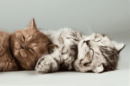 Co może jeść kot? Przysmaki, które zadowolą naszego pupila