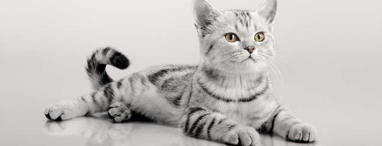 Czego nie może jeść kot?