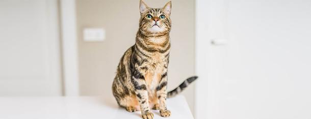 Czy kot może jeść makaron? Podstawa czy dodatek w diecie kota?