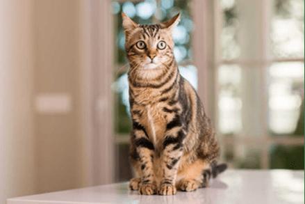 Czy kot może jeść lody? Czy to dobry pomysł na poczęstunek dla małych łasuchów?