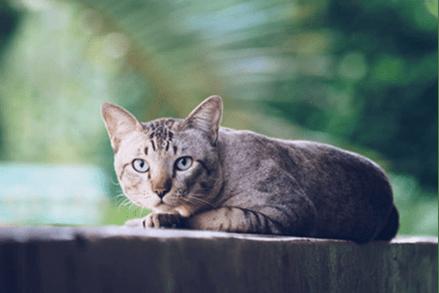 Czy kot może jeść tylko suchą karmę?