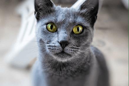 Czy kot może jeść ziemniaki? Czy można urozmaicić nimi dietę naszego mruczka?