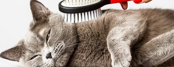 Czy powinieneś kąpać swojego kota?